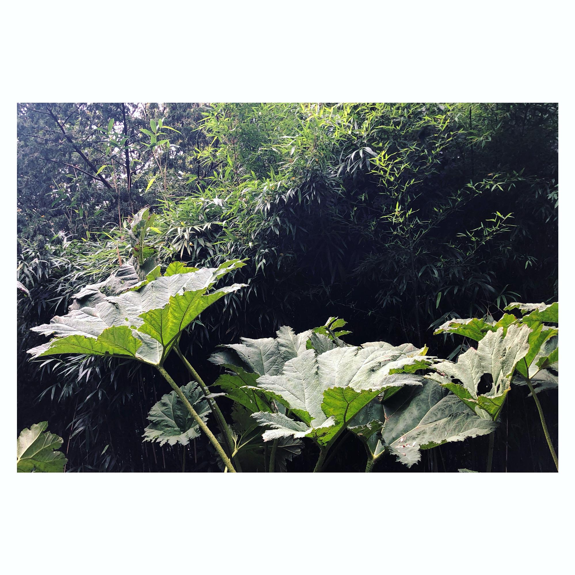 Planten kunnen horen
